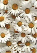 Daisy greetings card