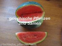🔥 🍉 Mini-Wasser-Melone SUGAR BABY 6 Samen Obst historische Sorte süss lecker