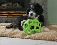 JW PET HOL-EE Roller Gummi Hundespielzeug, Größe 16.5cm, Große Größe