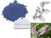 INDIGO SEEDS (Indigofera Tinctoria) Blue Dye Hair Colour Plant 25/50 Seeds