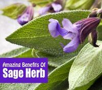 Sage Capsules Leaf Powder 100% Organic Dr Sebi