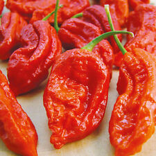 25 Seeds Red Ghost Pepper Bhut Jolokia EXTREME HOT Chili Heirloom WORLD RECORD!!