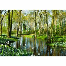 Fototapete Wald Bäume Natur Frühling Wasser Sonne liwwing no. 256