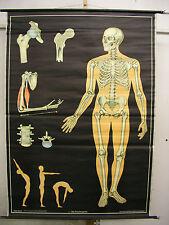 Schulwandkarte Wandkarte Wandbild Knochengerüst Skelett Knochen Gerüst 116x162cm