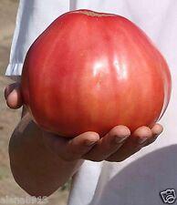 "Tomato seeds ""Volovei heart"" (10 seeds) Lot of 1 pcs"