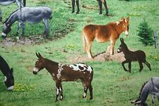 """MULE & DONKEY FABRIC! VARIETY OF BREEDS &COLORS in FARM LIFE! """"FARM ANIMALS"""""""