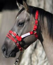 Monty Roberts DUALLY HALTER - Small Red Nylon Headcollar With how to use it DVD