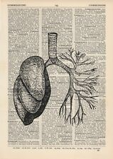 Anatomical Lung and Bronchi  Dictionary Art Print, Medical Anatomy Vintage