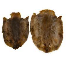Glacier Wear North American Beaver Pelt Hide bvr1201