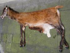 Red deer lifesize fullmount Hide Skin tanned stag Hunting European Antlers