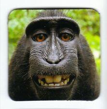Kühlschrank - Magnet: lustiger Affe - lächelnder Schopfmakake - smiling macaque