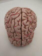 New listing Smso Anatomical Brain