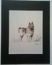 Hound, Norwegian Elkhound, #2 of 3. Original ink drawing 11x8.5 by Christof
