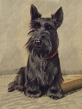 SCOTTISH TERRIER CHARMING SCOTTIE DOG GREETINGS NOTE CARD LOVELY SITTING DOG