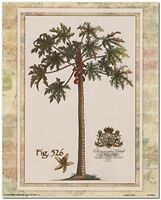 Tropical Palm Tree Vintage Fig 526 Contemporary Wall Decor Art Print Poster 8x10