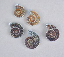 Ammoniten.Fossilie Anhänger   ,ca.  2,5 x 3 cm ,,(,Ab-73)