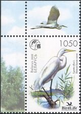 Belarus 2008 Great White Egret/Birds/Nature/Wildlife/Conservation 1v (n30905)