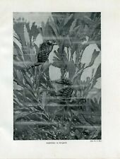 c1900 MARINE SEA HORSE ALGAE Antique Litho Print W.Bolsche