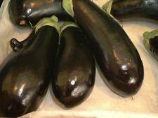Vegetable - Aubergine - Moneymaker F1 - 10 Seeds - First Class