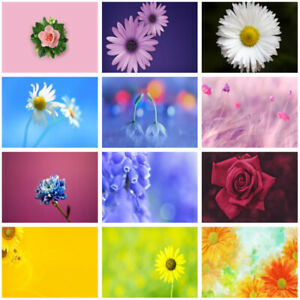 Rose Daisy Flower Photography Background Studio Photo Backdrop Wall Decor