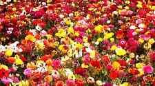Butterfly & Bee FLOWER SEEDS 20g Professional Garden Mix Pack Perennials Seed