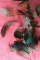 Real feathers x40 COCKEREL , birds natural feathers for craft UK FREE POST