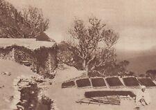 G1550 Au Houriet - Séchage des olives sur les toits - Stampa - 1934 old print