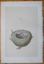 Original Print Bird Nest Egg Goldfinch Nest by Morris - 1875