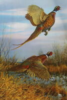 Ring necked Pheasants by Owen Gromme