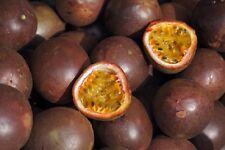 Passion Fruit - Edible - 30 seeds - HH Climbing Perennial - Fruit