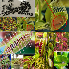 40pcs/Bag Venus Fly Trap Dionaea Muscipula Carnicorous Flower Seeds Garden Plant