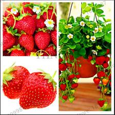 100 PEZZI semi RED GIANT Arrampicata FRAGOLA piante da frutto giardino casa bonsai 2021