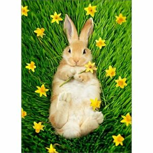 Avanti Press Bunny In Daffodils Easter Card