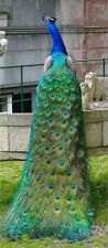 Art Print on Silk - Peacock w glorious tail feathers -embroider embellish bead