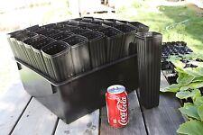 """Thirty-six 10"""" Mini Tree Pots with tray"""
