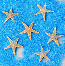 50x Mini Starfish Sea Star Shell Beach Wedding Craft DIY Making Decor Miniature