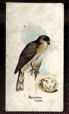 Tobacco Card, Lambert Butler, BIRDS EGGS, 1906, Sparrow Hawk, #34