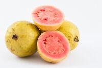 Garten Obst: APFEL-GUAVE einfach genial lecker !