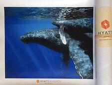 Wildlife Canvas Print - Whales