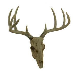 Little Bucky Wall Mounted Faux Aged Finish 10 Point Antlers Deer Skull 15 Inch