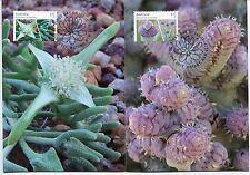 2017 Australian Succulents - Maxi Cards (4)