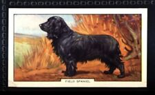 Gallaher Dogs 2nd Series 1938 - Field Spaniel No. 45