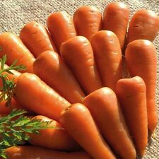 Vegetable Carrot Chantenay Royal Appx 1000 seeds