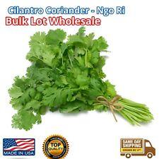 6000+ Cilantro Seed Fresh Herb Coriander Chinese Parsley rau mui ngo ri Herb LOT