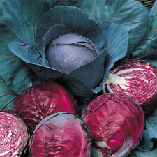 Cabbage Seeds Organic Red Cabbage Vegetable Seeds