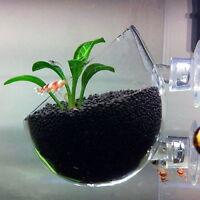 TNA Plant Glass Pot für Wasserpflanzen