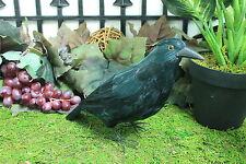 Furry Animal Feather Black CROW Raven Bird Taxidermy Horror Haunted Halloween M