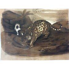 Jaguar ou tigre d' Amérique anonyme XIXe Félin Panthera onca Felidae