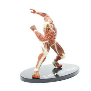 Attack on Titan The Armored Titan 17cm Anime Action Figure Model Toy Kids Gift