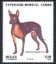 Mexico 1984 Dog Show/Dogs/Animals/Pets 1v (n25291)